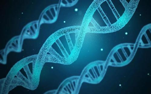 白头研究所等揭示超级增强子动态甲基化调控转录异质性