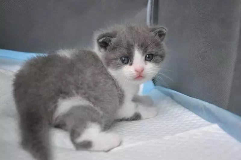 国内首例自主培育的克隆猫诞生,希诺谷生物科技宣布