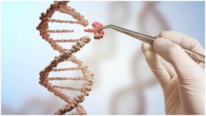 IPSC衍生的神经元与CRISPR筛选技术首次成功结合 加州大学等揭示
