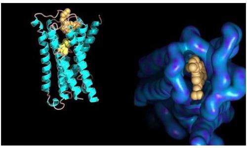 中科院等开发新计算模型MAP 用于定量蛋白质组数据差异表达分析