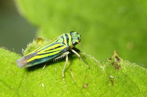 中德科学家关于昆虫多样性监测和互作研究获进展
