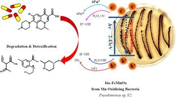 南工大用生物法制备出光芬顿催化剂 高效降解抗生素污染