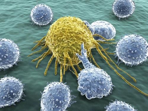 中国医学科学院揭示精神压力调控肿瘤免疫应答的机制 
