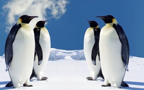 德国团队研制出企鹅绒毛状非织造布 能过滤0.3μm气溶胶粒子