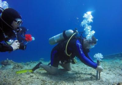 3D打印的塑料珊瑚受到鱼类青睐