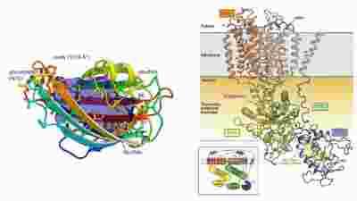 英国利兹大学等揭示NPC蛋白介导甾体分子转运的结构生物学解析