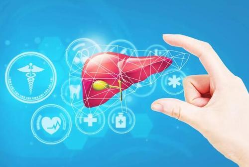日本科學家用iPS干細胞同時培育出肝臟等3種迷你器官