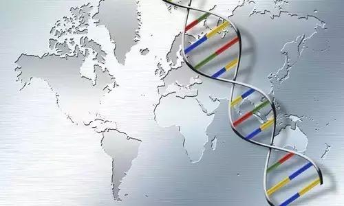 全球首個!單細胞測序繪制人胚胎造血和免疫系統發育圖譜