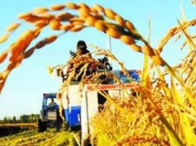 《中国的粮食安全》白皮书发布 权威解析中国粮食市场现状及未来