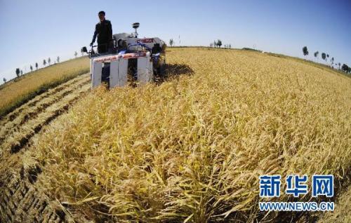 三季度,国内粮食供需总体宽松!