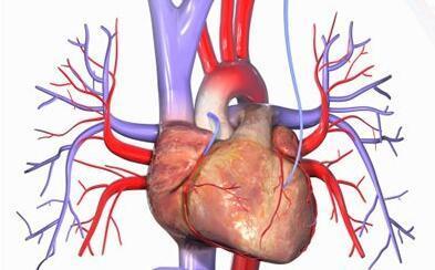 首个动脉粥样硬化免疫图谱揭示!PD1治疗可能增加心血管疾病风险