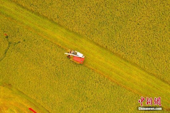 中国将加快起草《粮食安全保障法》