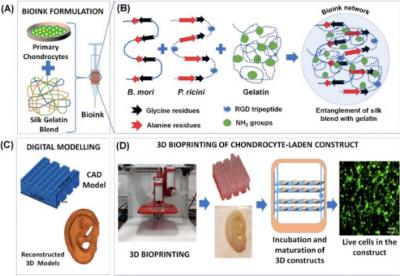 印度理工学院开发无交联剂的基于丝素-明胶生物墨水配方