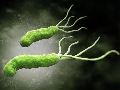 高效根除幽门螺杆菌!三合一胶囊Talicia获FDA批准上市