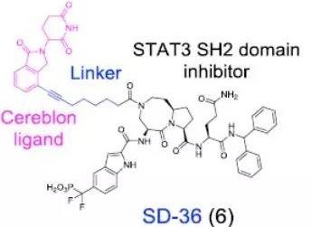 Protac利剑!密大构建STAT3特异性小分子剂抑制肿瘤生长