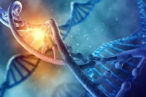 首个保护性基因突变!基因编辑或能预防阿兹海默症