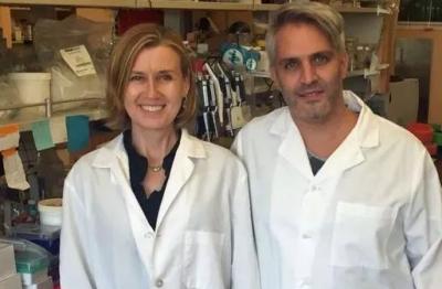 Nature:科学家找到了控制人体造血干细胞自我更新的