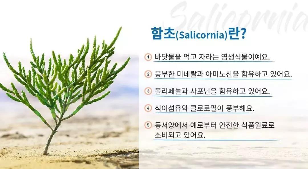 全球首款植物盐产品横空出世!隐藏很久的海篷子终发力