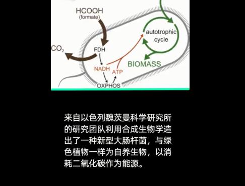 逆天!科学家造出新型大肠杆菌能吃CO2,亦有望应对全球变暖