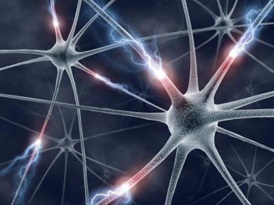 中科院揭示RNA结合蛋白HuR调不影响胚胎期神经发生