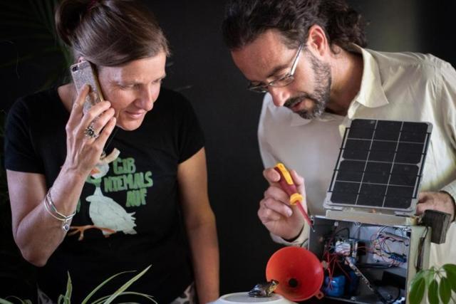 新南威尔士大学等研发蜂窝生态监控技术 可远程收听蛙叫