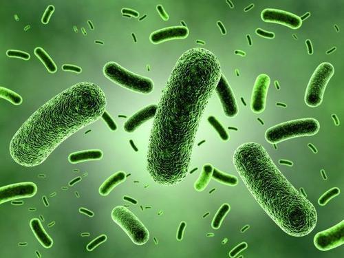 """抗生素新思路!我国首次揭示微生物耐药菌中""""适应性代价""""的机制"""