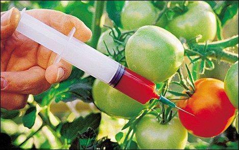 严防非法转基因育种:我国开展育种基地转基因成分检测