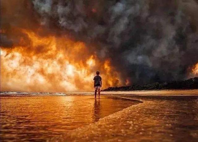 考拉或将列为濒危物种:澳洲山火除了威胁生物多样性还有哪些后果?