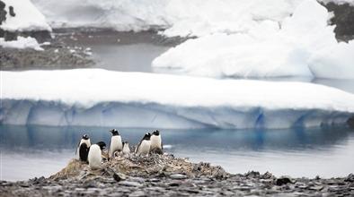 南极洲气温创近60年来新高 全球变暖加剧如何节能减排