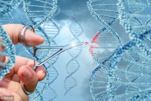 基因编辑鸡生下含关节炎和癌症药物鸡蛋,英学者取得新突破