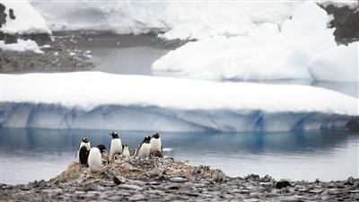 南极出现20.75℃高温 全球变暖催促新能源替代一次能源