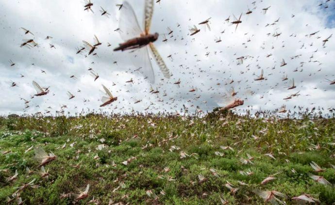 蝗虫蝗灾数十年仅见 致2020年农药需求超市场预期(附龙头名单)