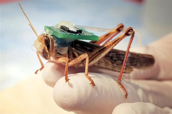 半机械蝗虫可检测爆炸物,耗资75万美元有何神奇?