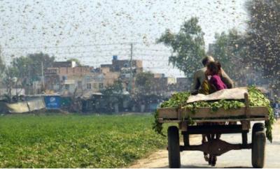 联合国发蝗灾警告:严重蝗灾与干旱气候、环境破坏有关