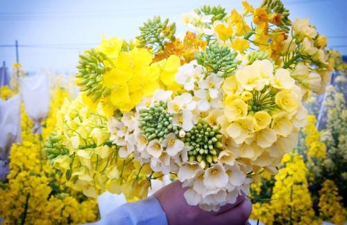 江西农业大学成功培育彩色油菜花,远缘杂交技术很重要