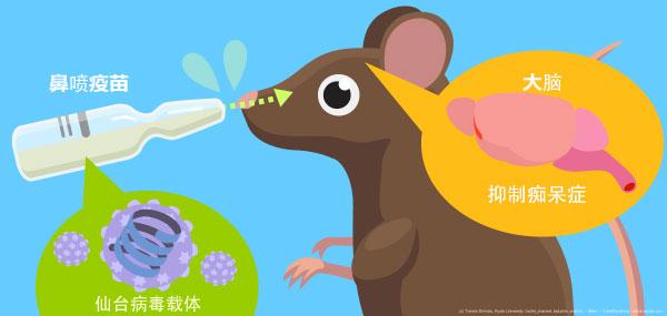 日本利用免疫疗法,开发出预防老年痴呆症的鼻喷疫苗