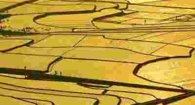 疫情或致全球严重粮食危机,袁隆平权威回应