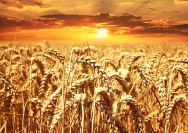"""扬州大学以火焰封草机替代除草剂,保障粮产与食品""""双安全"""""""