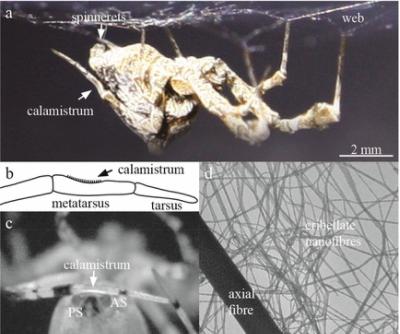 科学家找到纳米纤维防粘处理技术,灵感来源于蜘蛛