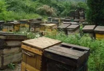 优质的蜂蜜是如何酿制成的?价格是多少?如何鉴别真假?