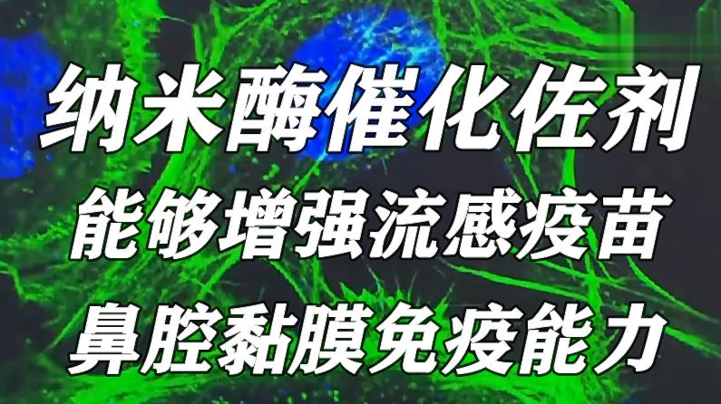中科院研究发现纳米酶催化佐剂,能够增强流感疫苗鼻腔黏膜免疫能力