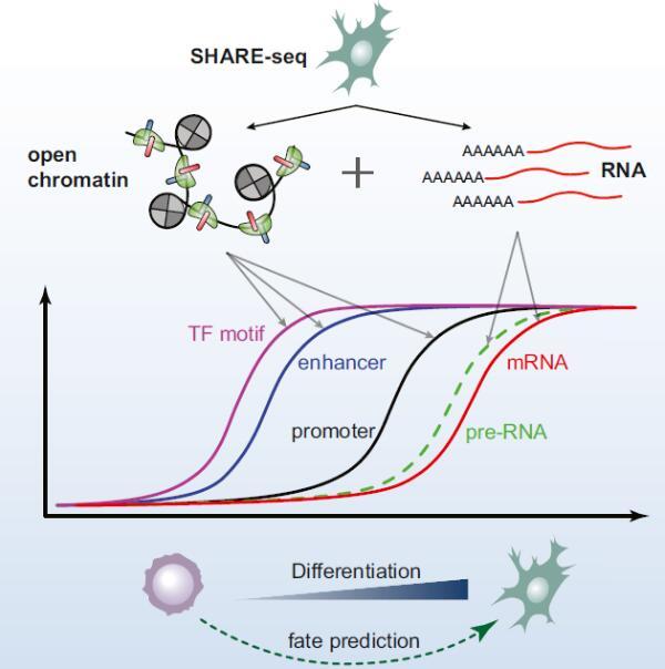 基因检测新技术!马赛等开发单细胞测序新技术测定染色质潜力