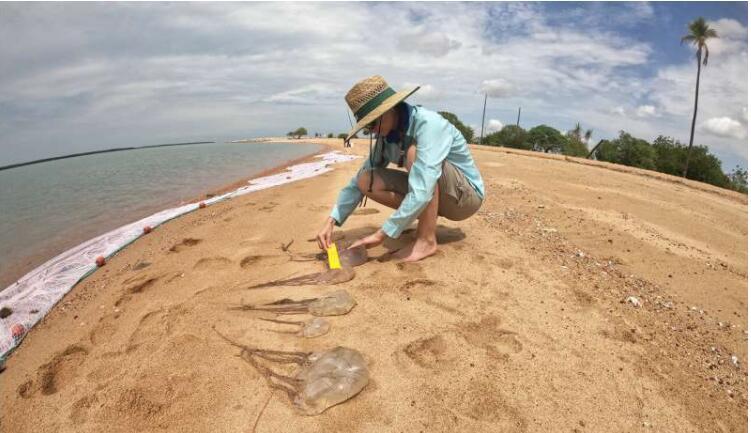 使用无人机技术来发现致命的水母