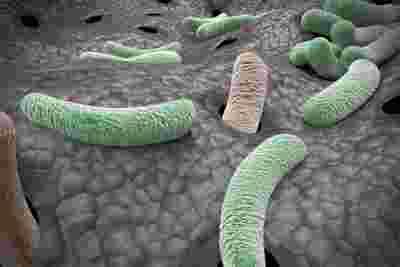 关节炎药物加强了我们对抗超级细菌的防御力