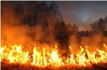 新的机器学习算法可预测森林火灾,AI助力减少火灾损害