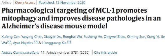 浙大开发出阿尔兹海默症治疗新策略:通过靶向MCL-1蛋白诱导线粒体自噬
