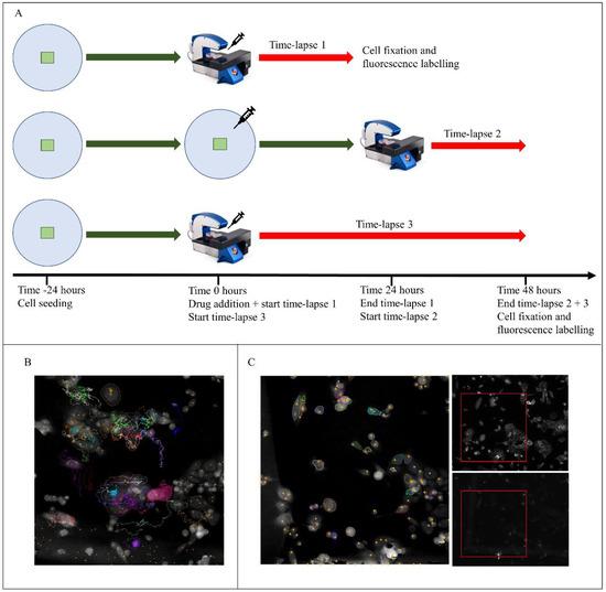 新型荧光显微镜,可对单个癌细胞进行纵向跟踪!