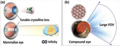 由人工开发的纳米复眼,在各个领域都起到了极大的作用!