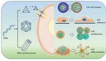 DNA纳米设备的应用:在生物细胞膜中探测,微妙至极!