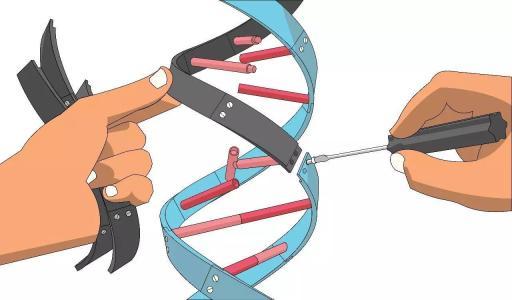 癌细胞终结者:新型递送系统Crispr—LNP让基因编辑治疗可精准剪切DNA